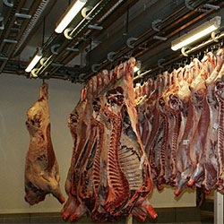 APPCC MEAT INDUSTRY