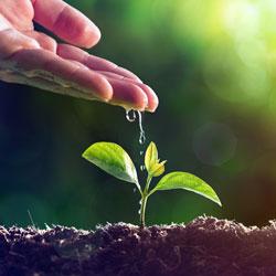 ozono-agricultura-ecologica